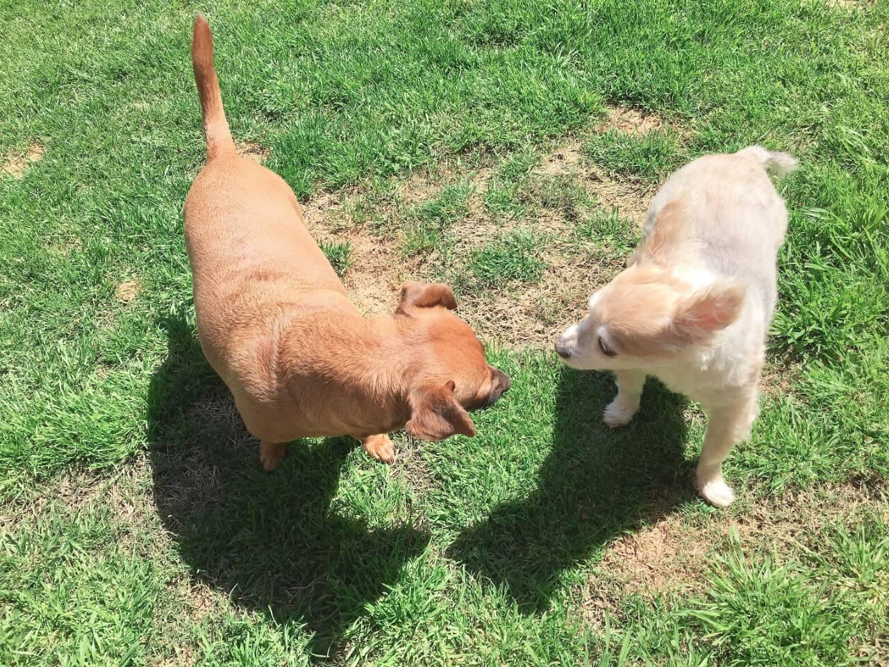 かわいい犬2匹